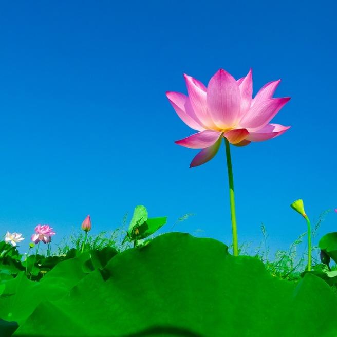 Flower_Pixabay